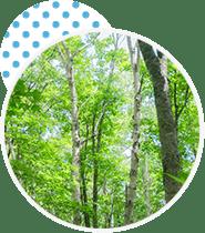 自然になじむ色合いのツリー柄