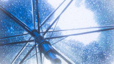 最近のビニール傘っておしゃれなんです!ビニール傘をオススメしたいポイント