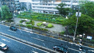 雪の日の傘は必要?地域によって分かれる雪の日の傘事情!